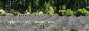 Purple Adobe Lavender Farm